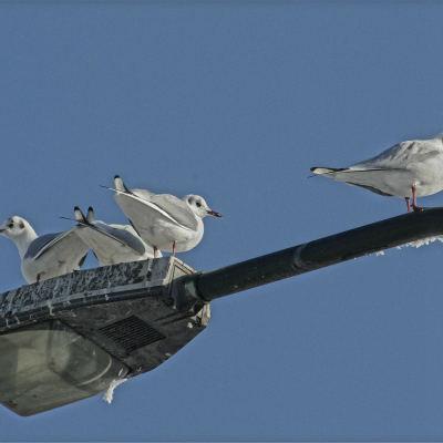 <strong>BIRDS</strong>