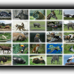 <strong>Animal Photo Collage</strong>
