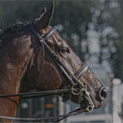 <strong>Horse Brabantse Outdoor 2008</strong>
