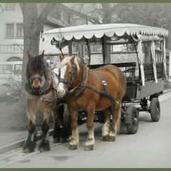 <strong>Streetview: Horses and carriage in Rothenburg ob der Tauber Germany</strong>