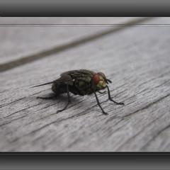 <strong>Insect on wooden table</strong>