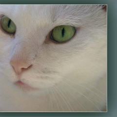 <strong>White Cat head profile (Witje, age 16)</strong>