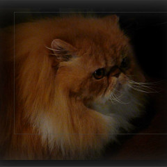 <strong>Red Cat</strong>