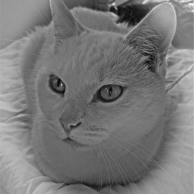 <strong>White cat WITJE</strong>