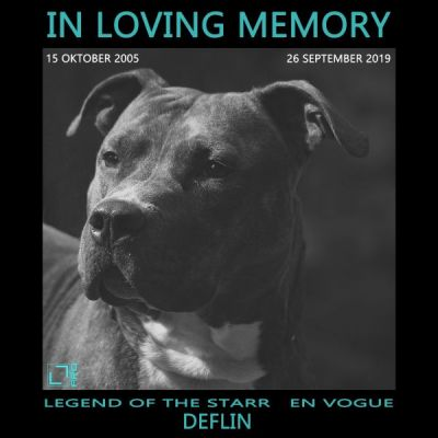 <strong>IN LOVING MEMORY - LEGEND OF THE STARR EN VOGUE aka DEFLIN</strong>